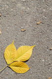 Hojas de otoño en el asfalto Imágenes de archivo libres de regalías