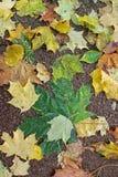 Hojas de otoño en el asfalto Fondo fotografía de archivo libre de regalías