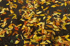 Hojas de otoño en el asfalto mojado Imagen de archivo libre de regalías