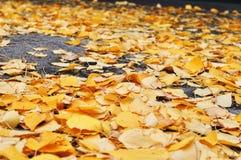 Hojas de otoño en el camino Imagenes de archivo