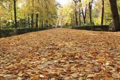 Hojas de otoño en el camino y los árboles Fotos de archivo