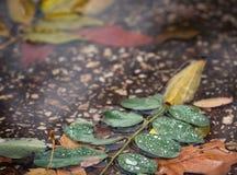 Hojas de otoño en el charco Imagen de archivo