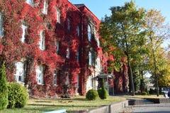 Hojas de otoño en el edificio de madera Imagenes de archivo