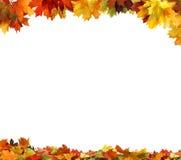 Hojas de otoño en el fondo blanco Fotografía de archivo