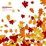 Hojas de otoño en el fondo blanco Fotos de archivo