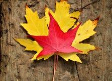Hojas de otoño en el fondo de madera Foto de archivo
