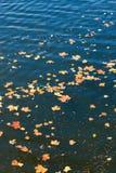 Hojas de otoño en el lago Imagen de archivo