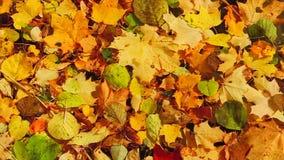 Hojas de otoño en el lago almacen de video