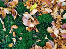 Hojas de otoño en el musgo imagenes de archivo