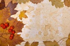 Hojas de otoño en el papel texturizado Fotografía de archivo