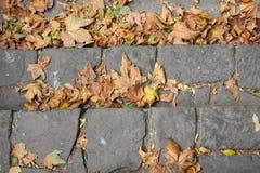 Hojas de otoño en el pavimento de piedra Foto de archivo libre de regalías