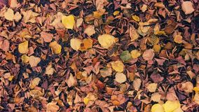 Hojas de otoño en el piso del bosque Foto de archivo