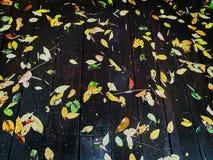 Hojas de otoño en el piso de madera fotos de archivo