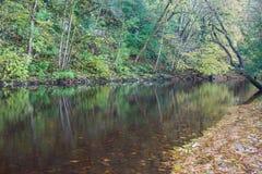 Hojas de otoño en el río Ure Fotos de archivo libres de regalías