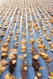 Hojas de otoño en el tejado Fotografía de archivo libre de regalías