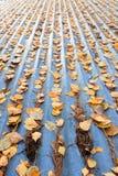 Hojas de otoño en el tejado Fotos de archivo