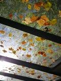 Hojas de otoño en el tejado de cristal fotografía de archivo