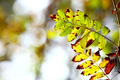 Hojas de otoño en fondo borroso bosque Foto de archivo libre de regalías