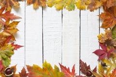 Hojas de otoño en fondo de los tableros blancos Fotos de archivo libres de regalías