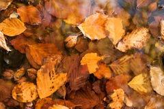 Hojas de otoño en fondo del agua Fotos de archivo libres de regalías