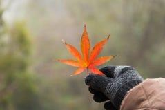 Hojas de otoño en guante negro Foto de archivo libre de regalías