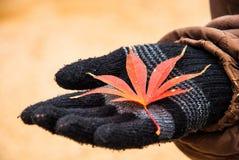 Hojas de otoño en guante negro Fotografía de archivo