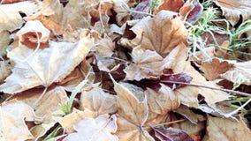 Hojas de otoño en helada almacen de video