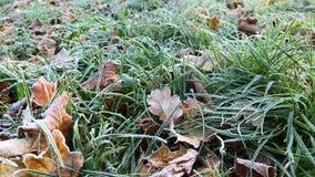 Hojas de otoño en helada almacen de metraje de vídeo