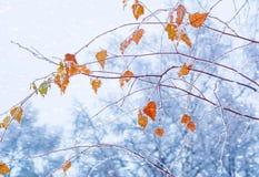 Hojas de otoño en heladas de un otoño de la escarcha Licencia congelada otoño Fotografía de archivo