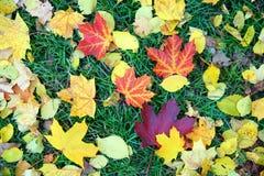 Hojas de otoño en hierba Imagen de archivo libre de regalías