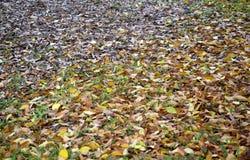 Hojas de otoño en hierba Imágenes de archivo libres de regalías