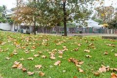 Hojas de otoño en hierba Fotografía de archivo libre de regalías
