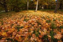 Hojas de otoño en hierba Fotos de archivo libres de regalías