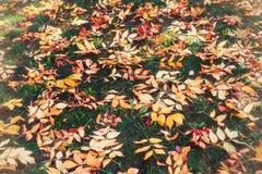 Hojas de otoño en hierba foto de archivo libre de regalías