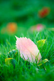 Hojas de otoño en hierba verde Fotografía de archivo libre de regalías