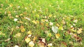 Hojas de otoño en hierba verde Tiro del ángulo inferior almacen de video