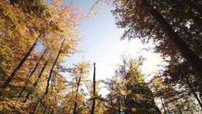 Hojas de otoño en la cámara lenta y sol que brilla a través de las hojas de la caída almacen de video