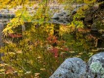 Hojas de otoño en la charca imagen de archivo