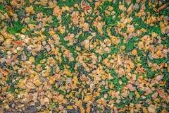 Hojas de otoño en la hierba fotos de archivo libres de regalías