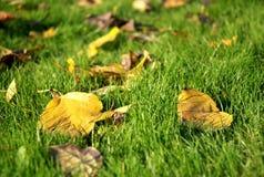 Hojas de otoño en la hierba verde fotografía de archivo