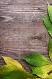 Hojas de otoño en la madera Fotos de archivo