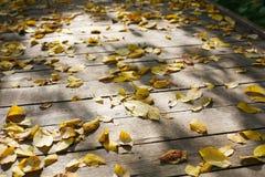 Hojas de otoño en la pista Fotos de archivo