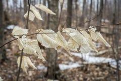 Hojas de otoño en la primavera Foto de archivo libre de regalías