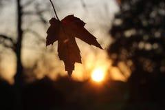 Hojas de otoño en la puesta del sol Imagenes de archivo