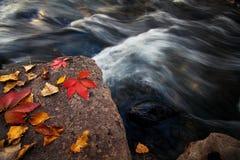 Hojas de otoño en la roca Foto de archivo libre de regalías