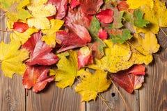 Hojas de otoño en la tabla Fotos de archivo