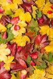 Hojas de otoño en la tabla Fotografía de archivo