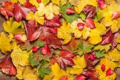 Hojas de otoño en la tabla Imágenes de archivo libres de regalías
