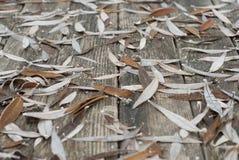Hojas de otoño en la tabla de madera Imagenes de archivo