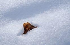 Hojas de otoño en la textura de la nieve Foto de archivo libre de regalías